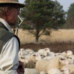 Schaapsherder met zijn schapen