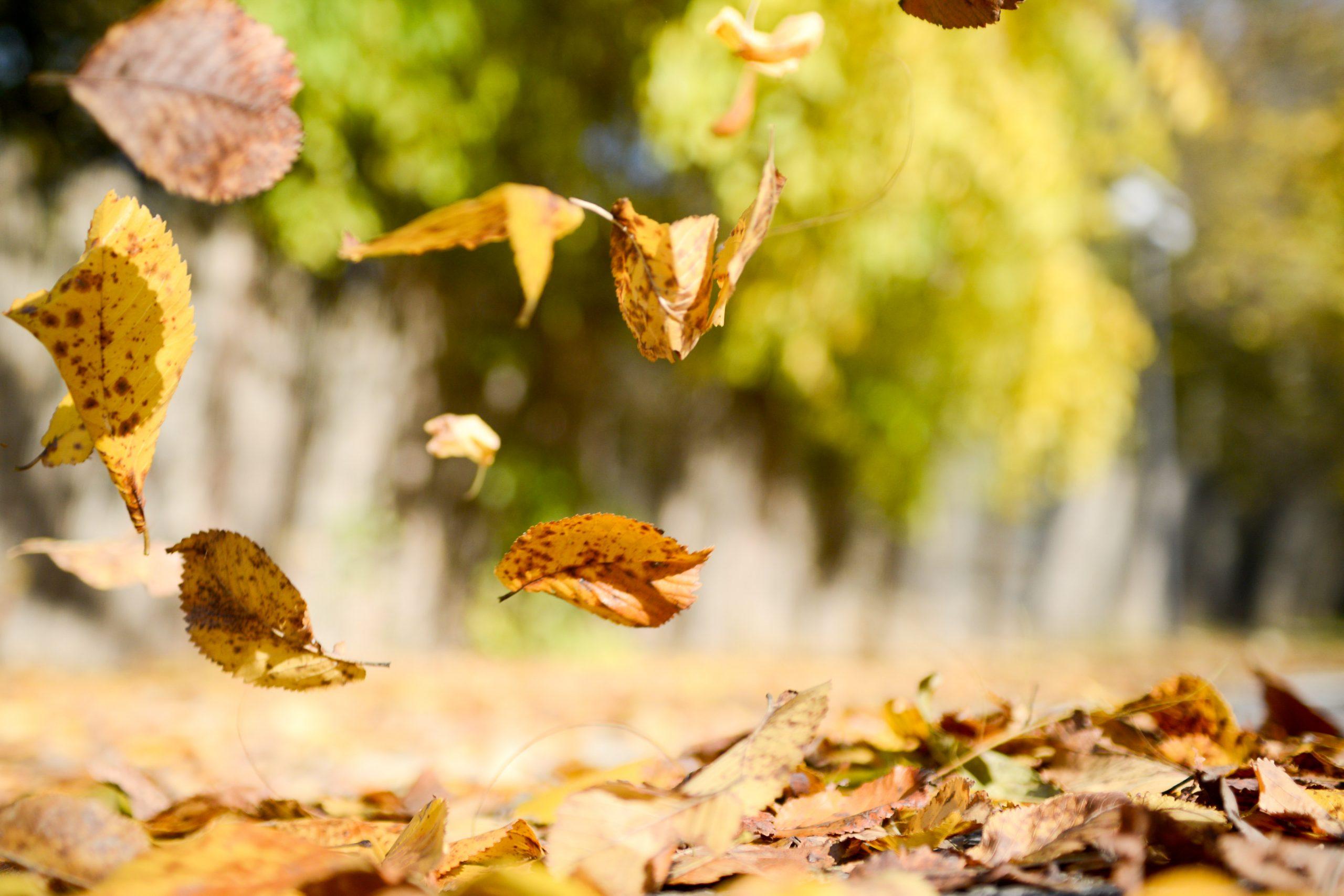 Herfstbladeren in beweging